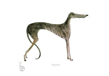 Fun Dog Art Print - Greyhound